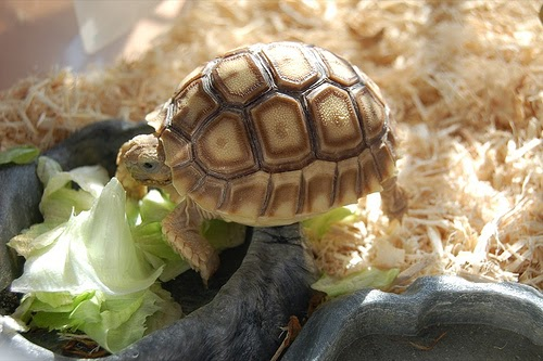 What Do Turtles Eat - Pet Turtles Food | Our Pets, We Love 'Em