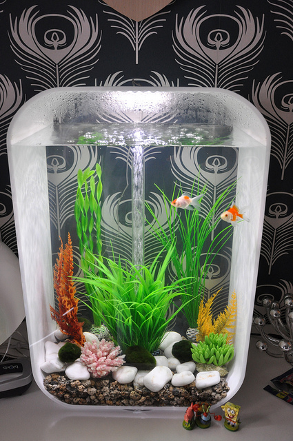 Decorative Biorb Fish Tank by Simon Harrison & 2010 | Our Pets We Love u0027Em