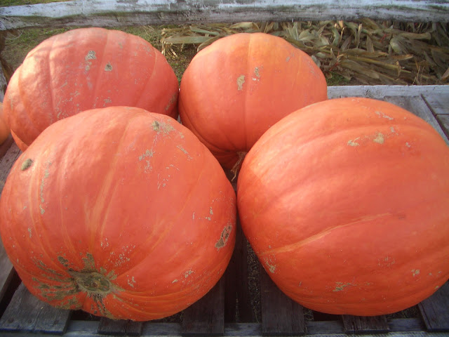 four large pumpkins