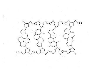 Sutton's AP Biology: DNA Structure