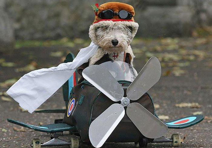 Heads California, Tails Carolina: Pilot's Pilot Costume