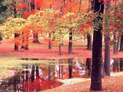 arboles-reflejados-en-el-agua