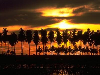hilera-de-palmeras-ante-la-playa-y-una-puesta-de-sol