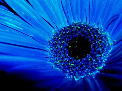 parte-de-una-flor-de-petalos-azules
