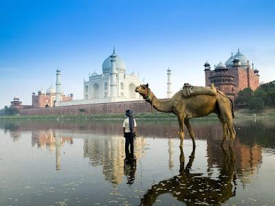 camello-en-el-rio-y-detras-el-taj-mahal