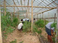 Working in organic farm