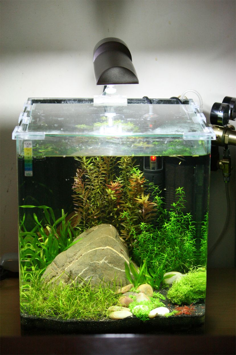 S c v aquascaping ideas red cherry shrimps dennerle for Nano cube fish tank