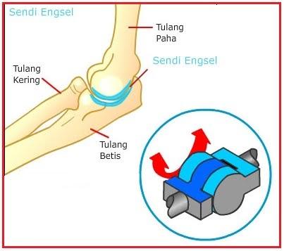 artroza deformantă a articulației talacaneale