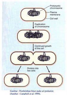 Proses Reproduksi pada Bakteri - cryptonews.id