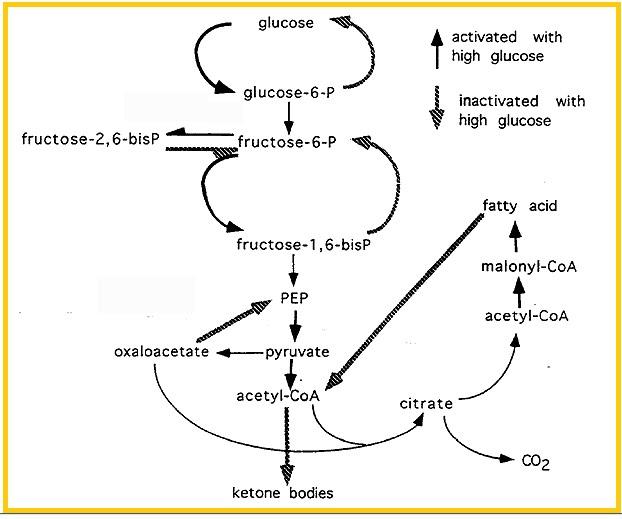 Reaksi Biokimia Pada Produksi Kecap Manis