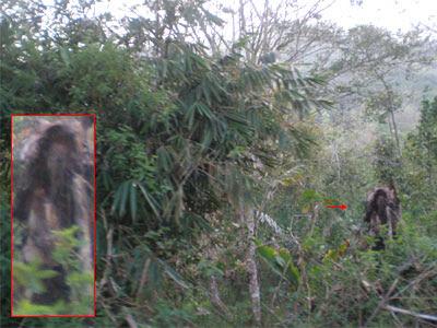 Gambar Penampakan Hantu Penampakan Hantu Kuntilanak Di Hutan