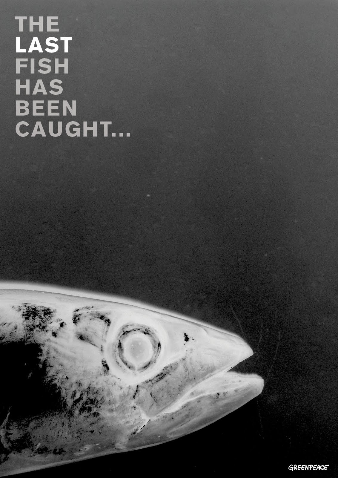 Katherine White awareness poster campaign for greenpeace