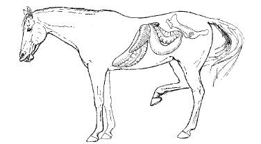 Melampous: Equine Surgery. Third Edition. 2006. AUER, Jörg