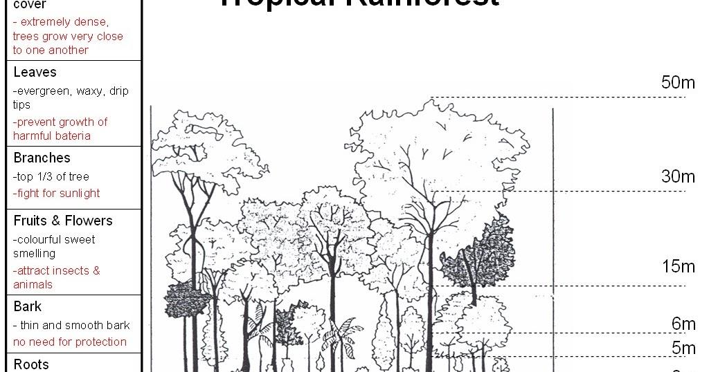 Geography & Cartoon Blog: Natural Vegetation