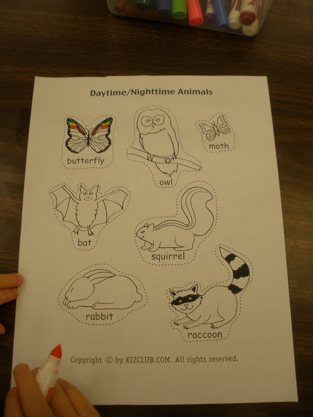 Night Of The Animals Worksheet
