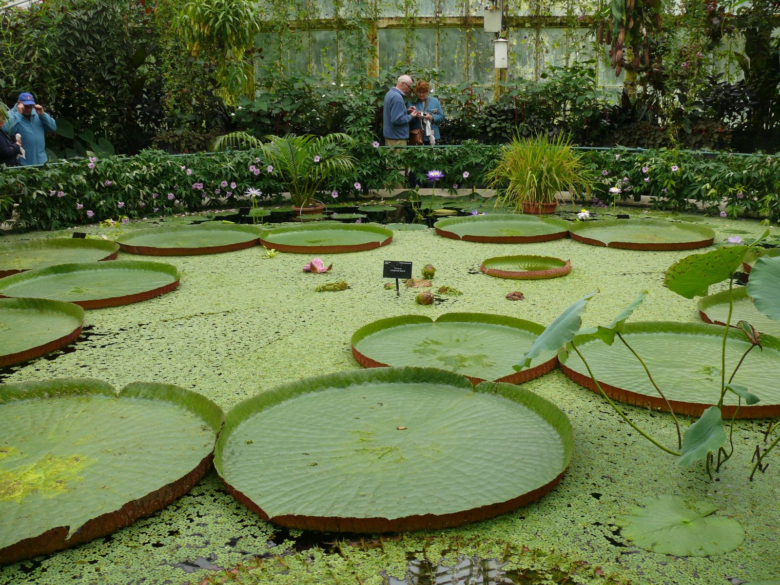 Maradhi manni our london trip kew gardens the green for Plants to put in pond