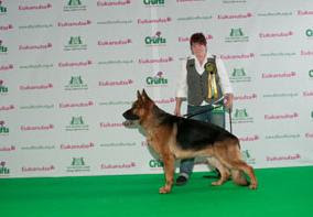 german shepherd dog cruft show