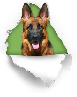 instincts of german shepherd dog training tips on training German Shepherd most intelligent canine breed technique for training dogs tips on German Shepherd Training German Shepherd Dog instincts