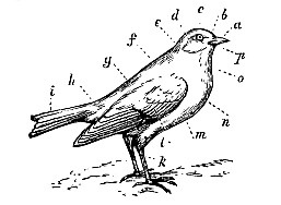Seattleite Imagery: Bird by bird, brick by brick