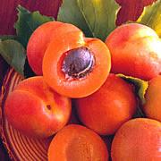 Buah+apricot.jpg