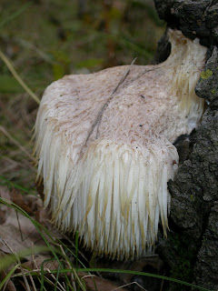 Admirable Get Your Botany On Thats One Odd Fungus Short Hairstyles Gunalazisus