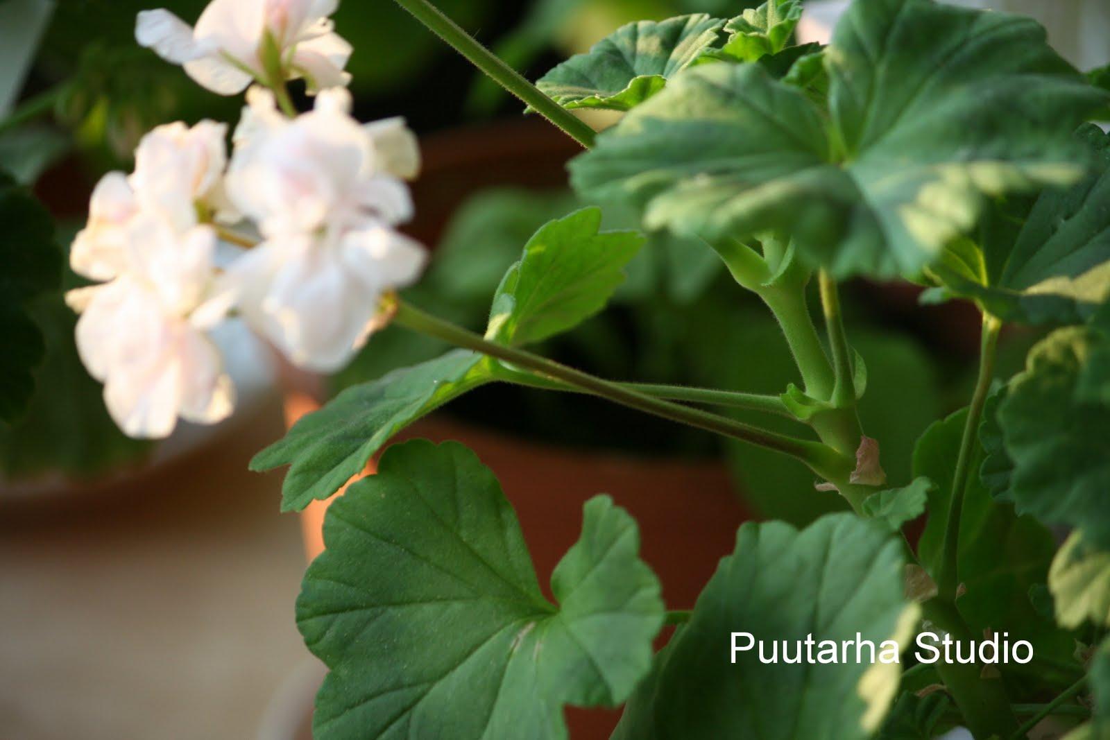 Sarin puutarhat: Kukkien nyppiminen ; )