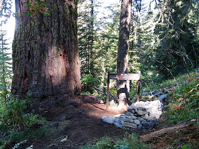 Big Tree trail Oregon Caves National Monument Oregon