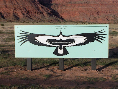California Condor size comparison chart Vermilion Cliffs Arizona