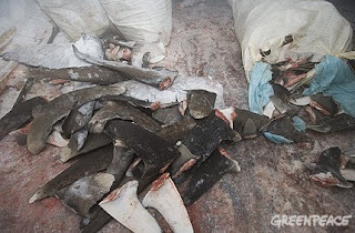 IBAMA apreende toneladas de barbatana de tubarão