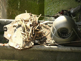 View of tower cam (aka pudding cam) showing how close the peregrines get to it. We'll clean it as soon as we can