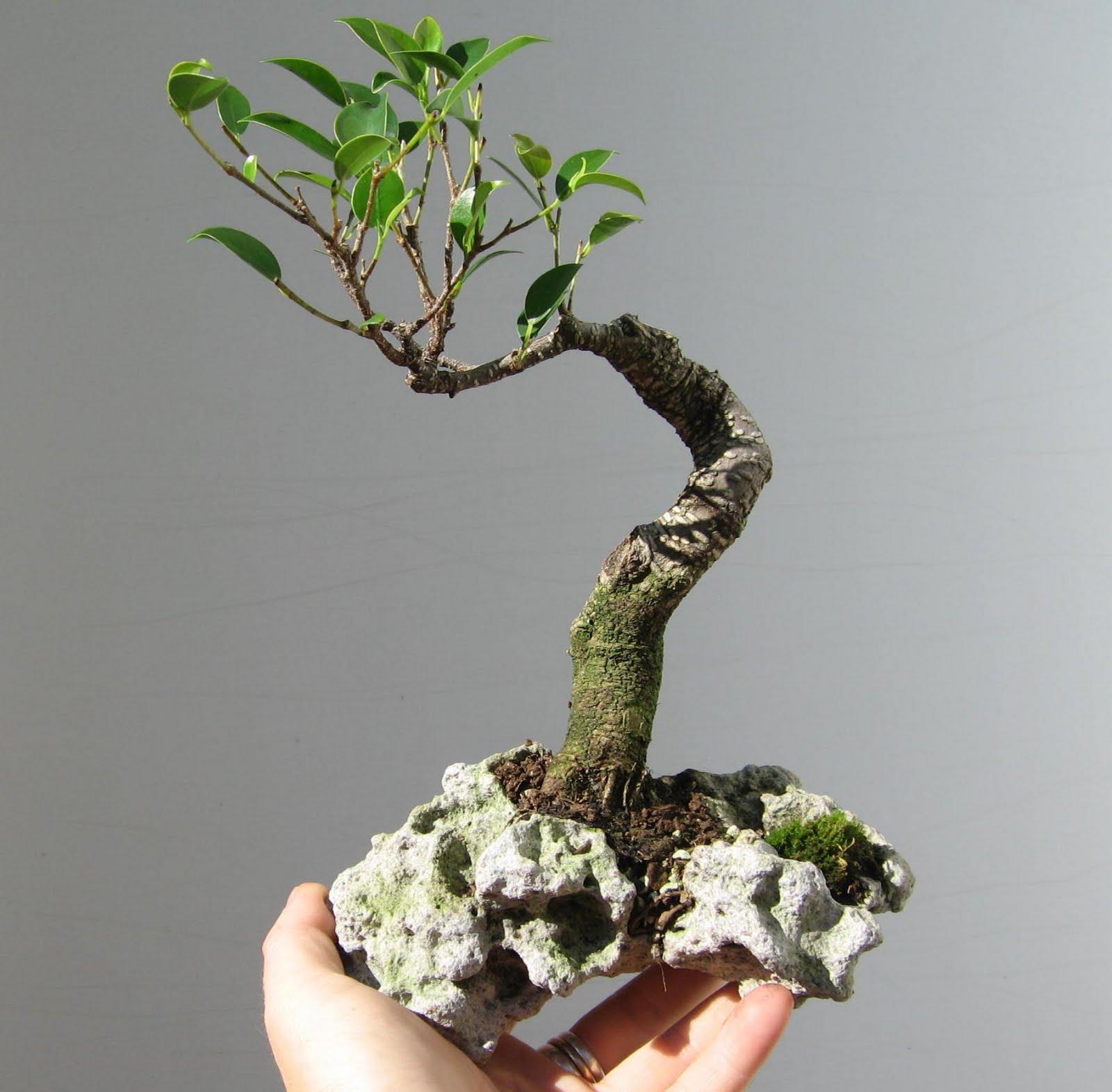 bonsai das sch nste hobby der welt herbstliche bonsaifotos ein gedicht und ein cartoon. Black Bedroom Furniture Sets. Home Design Ideas