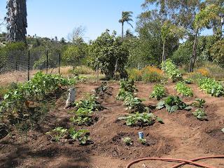 Summer Vegetable Garden: LadyD Books