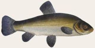 9ed9676280e FishSport-Риболовен блог: 2009