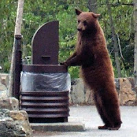 Stock Market Bear at Trash Can