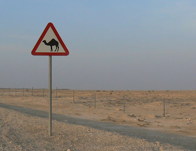 A camel sign in the Qatar desert