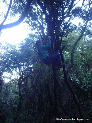 Tarzan? Las lianas soportan muy bien!