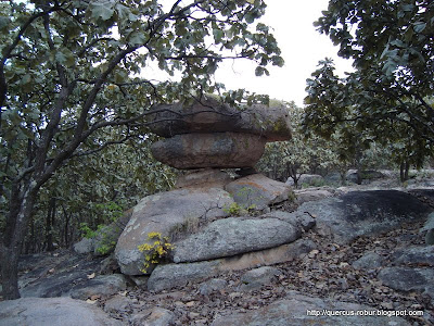 El hongo de piedra