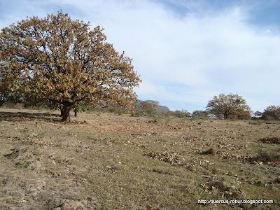 Terrenos aledaños a la Hacienda La herradura