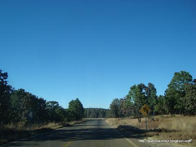 Bosque de Pino y Encino