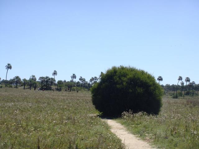 Parque Nacional El Palmar de Yatay, Entre Ríos, Argentina, Elisa N, Blog de Viajes, Lifestyle, Travel