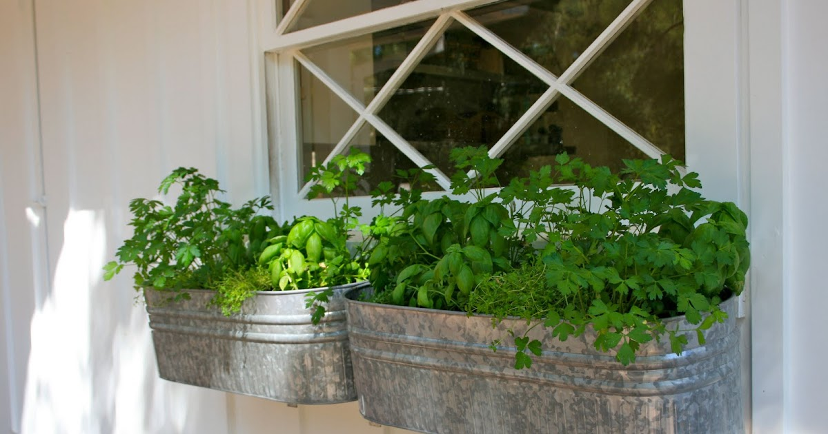 Herb Planter Box Outdoor: The Polished Pebble: Herb Garden Window Box