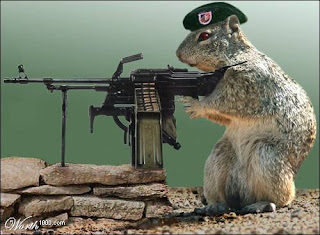 http://3.bp.blogspot.com/_5tKvwoPy9SM/SA3SI_RsIVI/AAAAAAAABXo/YLy--FfjA0w/s320/squirrel-with-machine-gun.jpg
