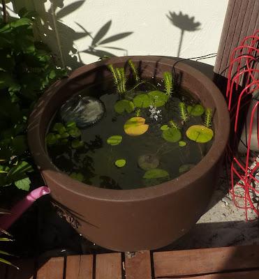 diy fabriquer un mini bassin aquatique initiales gg. Black Bedroom Furniture Sets. Home Design Ideas