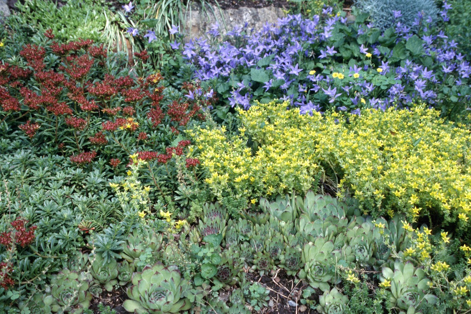 Make a rock garden for Garden shrubs
