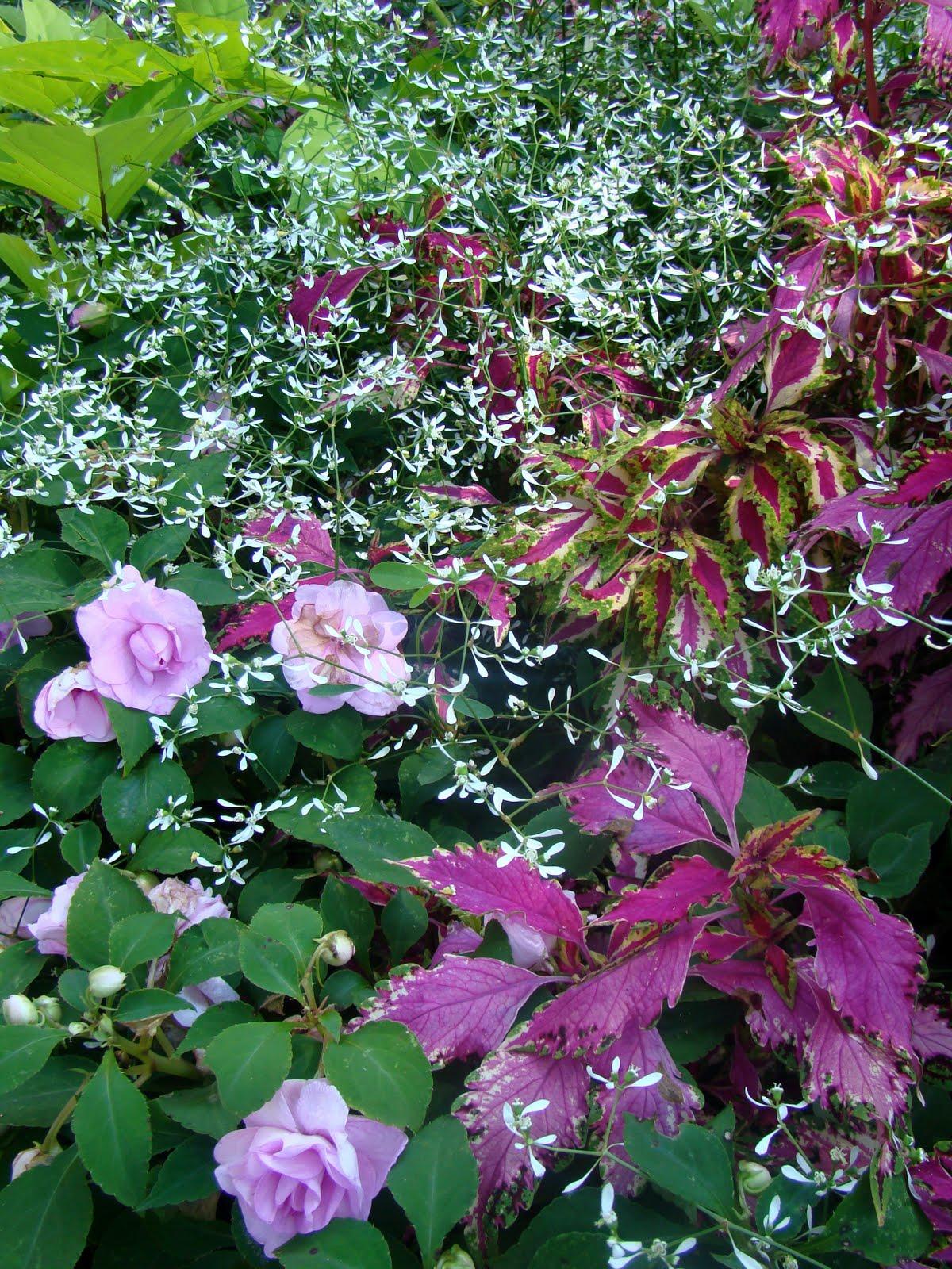 Pruning in the Late Summer Flower Garden - Prune Away! on
