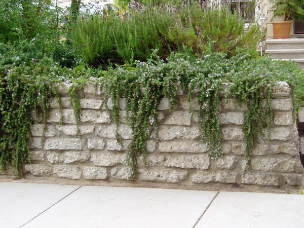 Repurposed and recycled creative ideas for garden design for Recycled wall