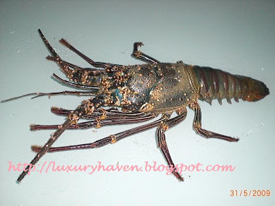 how to cook spiny lobster