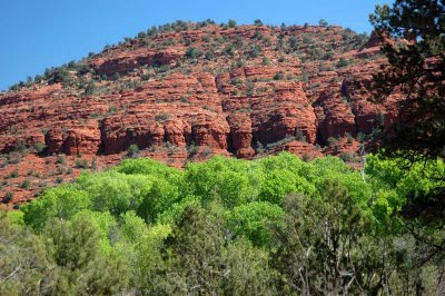 red rocks contrast with new spring leaves