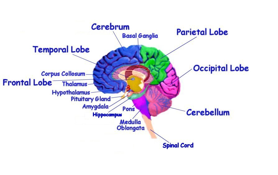 Watertown High Video Production Blog: Brain Impediments of ...