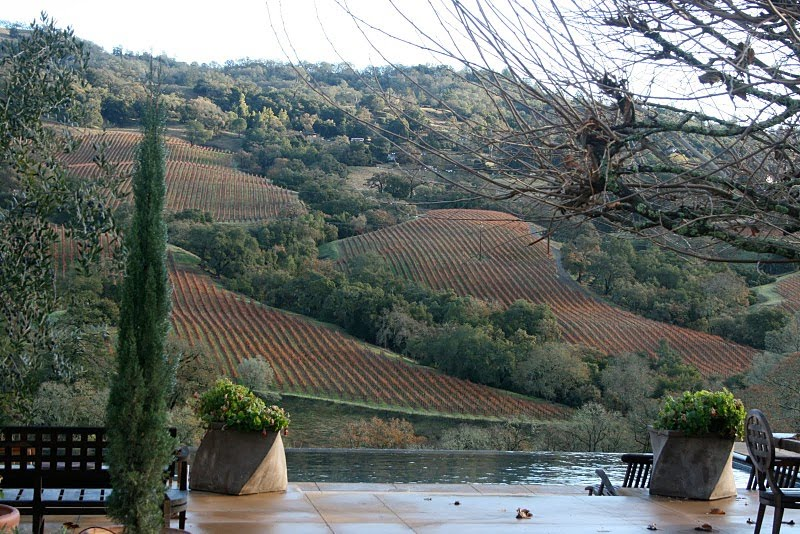 View of rolling hills and vineyards from Delores Arabian's home in Sonoma County